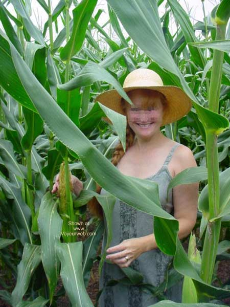 Pic #1 Jigsey's Corn Field