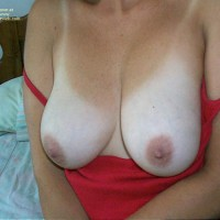 Shy Wife Great Tits