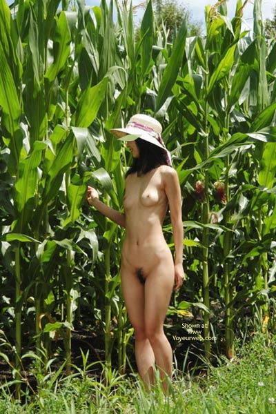 Nude Girl In Cornfield - Nude In Nature , Nude Girl In Cornfield, Black Bush, Wearing A Hat, Nude In Nature