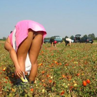 Subtle Upskirt - Upskirt , Subtle Upskirt, Pink Dress, Ready For Plucking, Tomato Picking