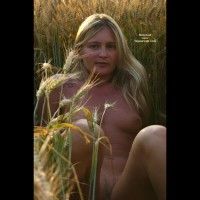 Elise In A Golded Wheat Field