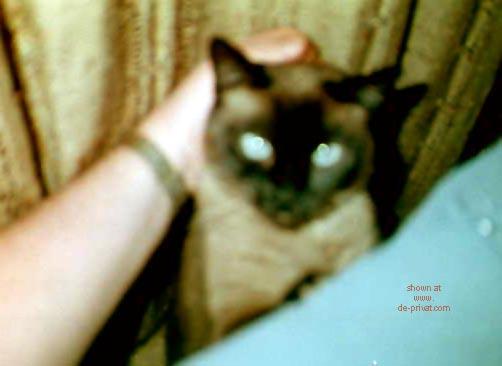 Pic #1 Sasha      - My Sweet Pussy