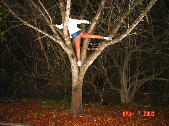 Pic #1 Up A Tree