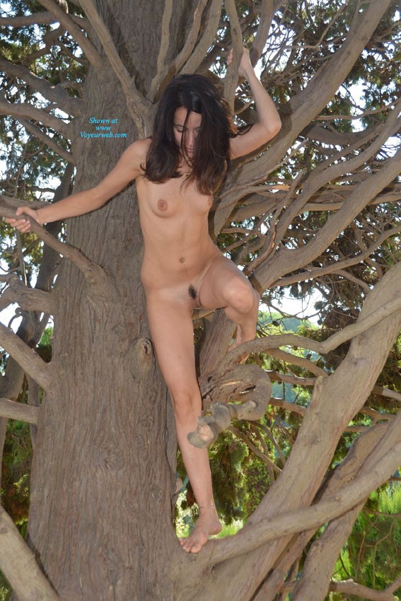 Judy in The Tree - Brunette Hair, Exposed In Public, Nude In Public , Still More Judy ... Climbing Around In The Trees